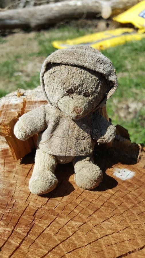 Потерянный медведь стоковые изображения
