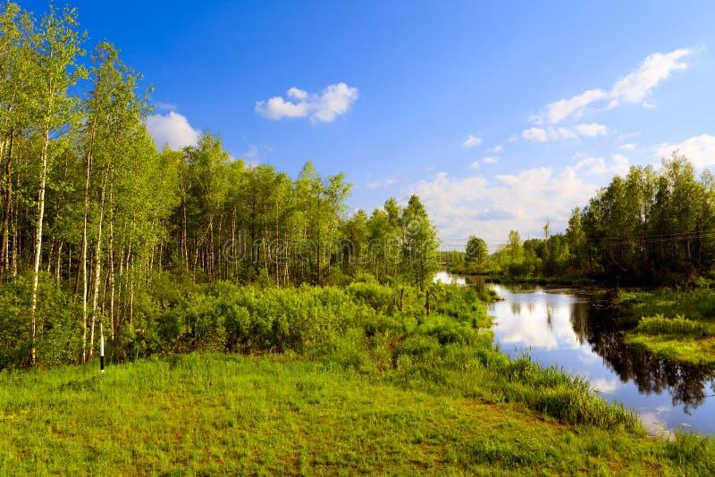 древесина реки стоковые фотографии rf