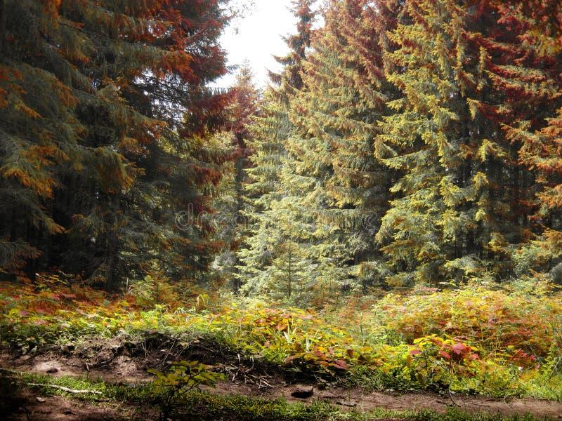 Древесина сказки в красных, желтых и зеленых цветах стоковые фотографии rf
