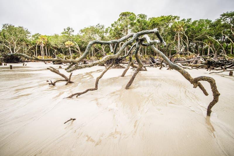 Древесина смещения на острове Южной Каролине звероловства стоковая фотография