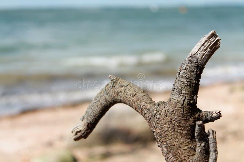 Древесина смещения на пляже стоковая фотография