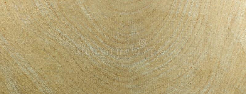 Древесина тамаринда ежегодного кольца стоковая фотография