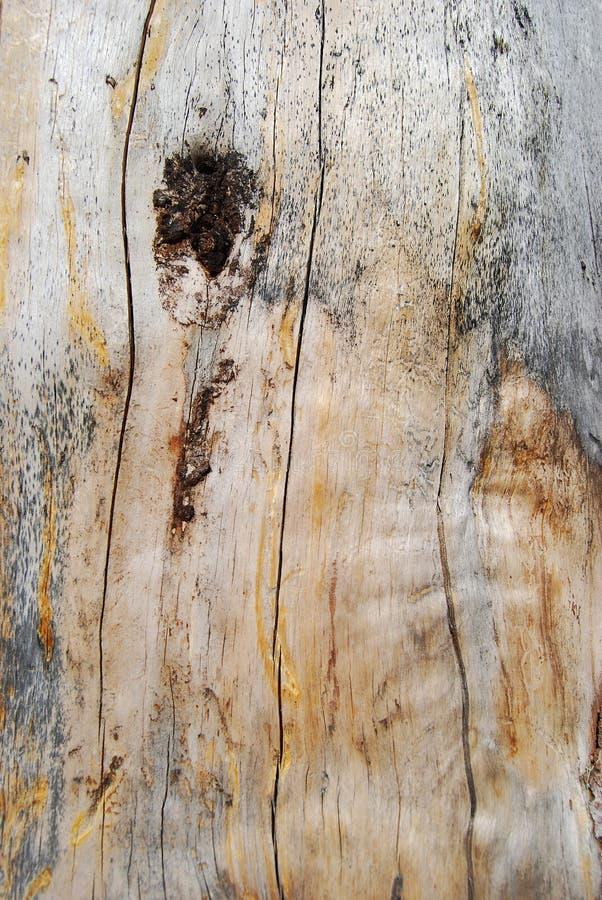 древесина текстуры стоковое фото