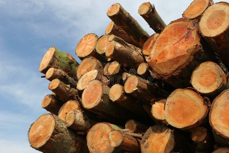 древесина тимберса пиломатериала журналов стоковая фотография