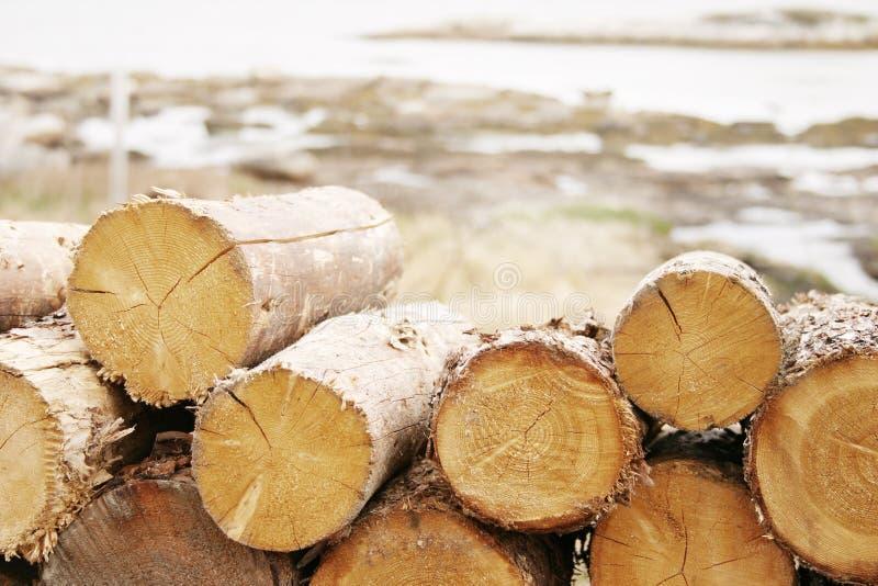 древесина стоковая фотография rf