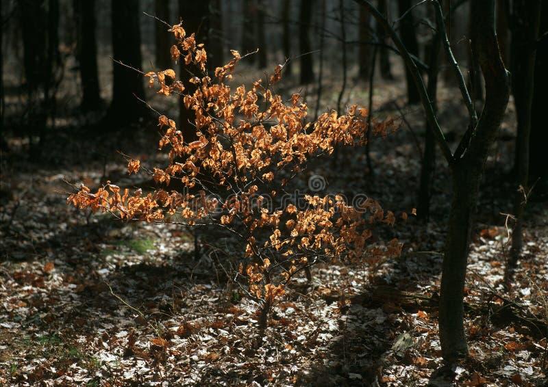 древесины весны натиска стоковое изображение