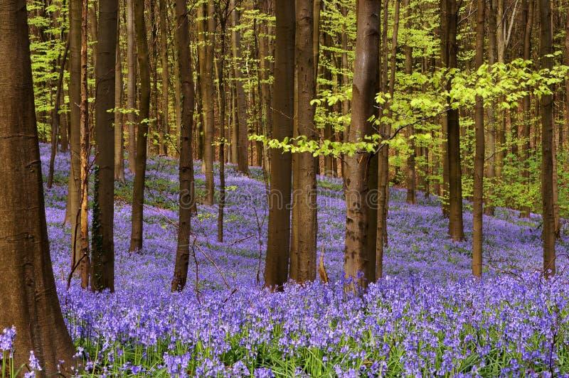 древесины в апреле стоковое изображение