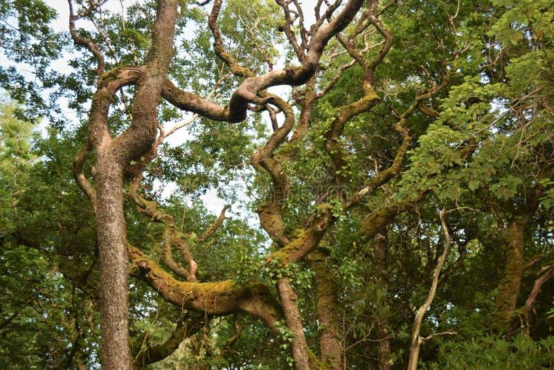 Древесины в Forest Park, Co Donegal, Ирландия стоковое изображение rf