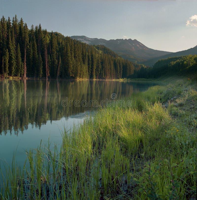 древесины озера стоковые изображения rf