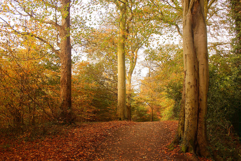 древесины осени стоковые фото