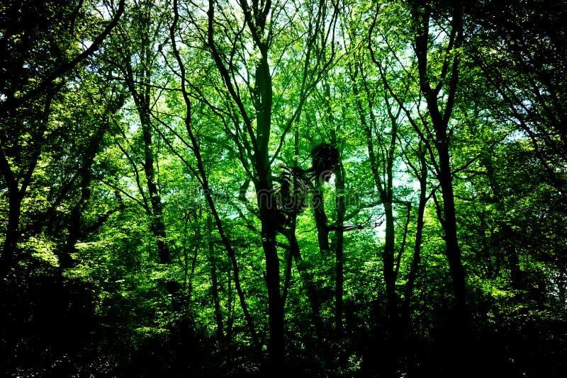 древесины привидения стоковое фото