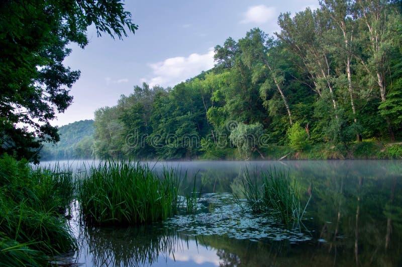 древесины реки стоковая фотография rf