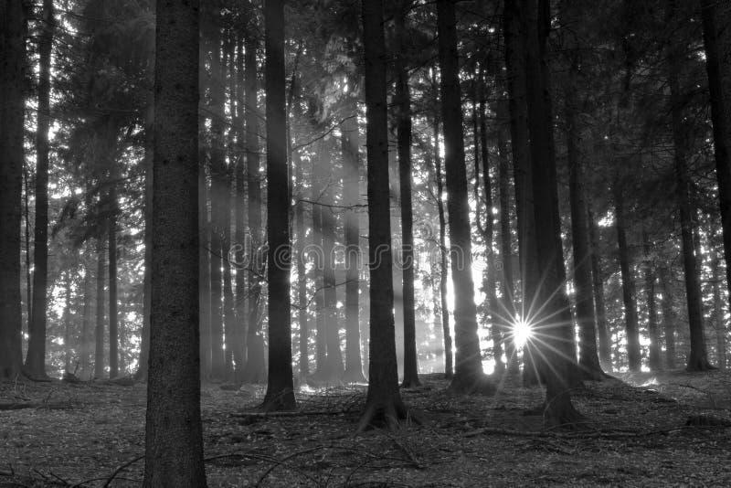 древесины солнца луча стоковая фотография