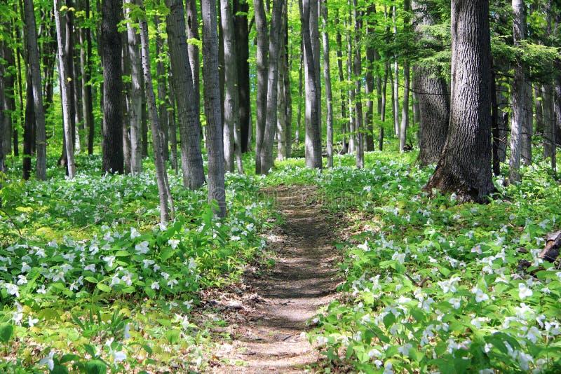 древесины тропки стоковые изображения