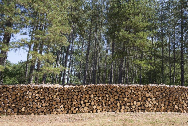 Download Древесины стоковое фото. изображение насчитывающей хобот - 33738676