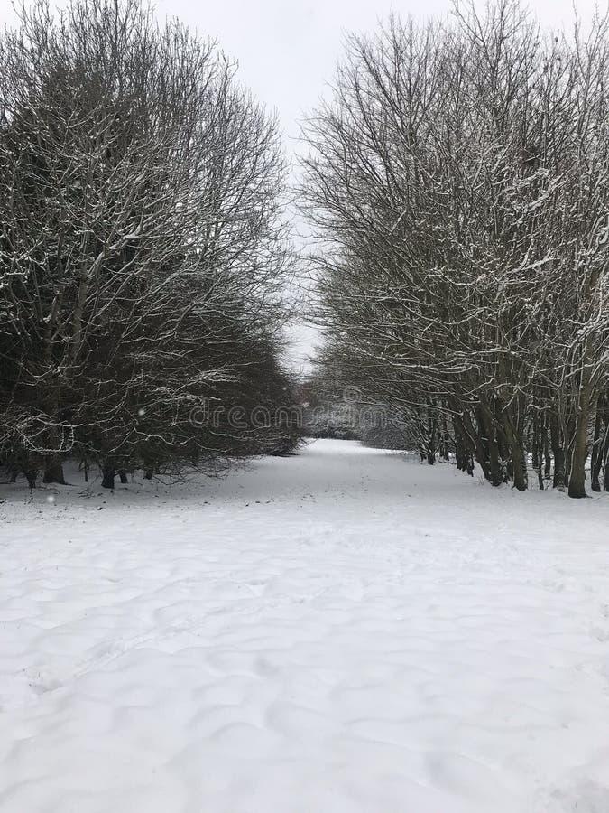 Древесины Snowy на юге  Англии стоковые фотографии rf