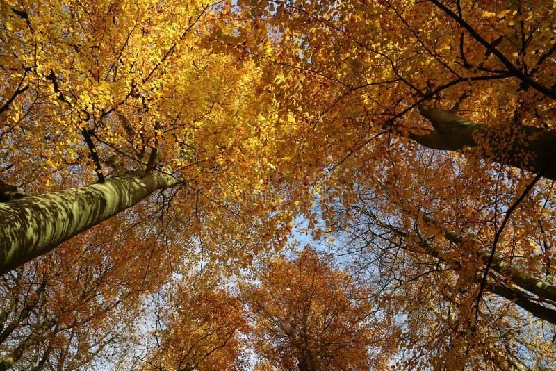 Древесины veluwe осени стоковые изображения
