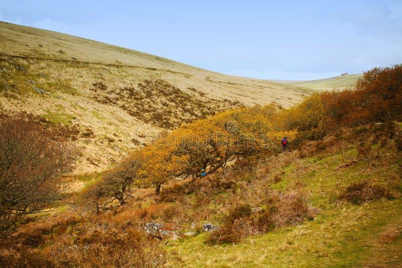 Древесины Wistmans Национальный парк Dartmoor Девон Великобритания стоковые изображения rf