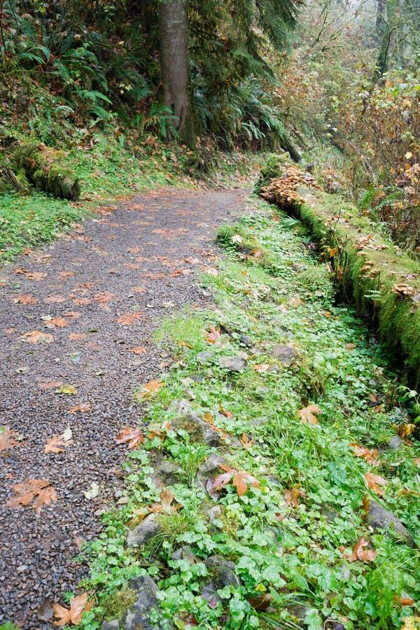 Древесные зелени влажного гравия следа дождевого леса сочные стоковая фотография