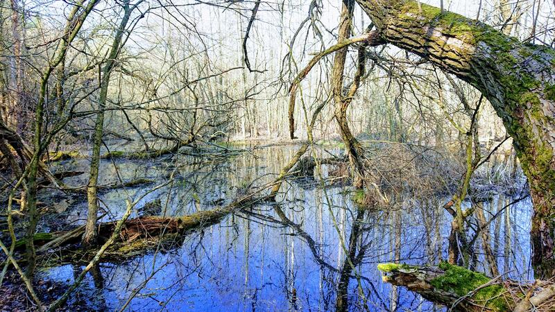 Древнее волшебное мистическое болотное проклятое место стоковые фотографии rf