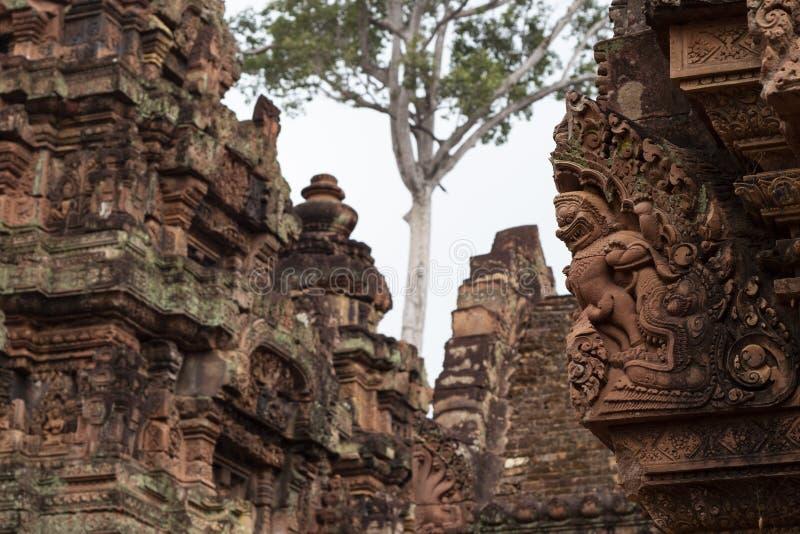Древний храм Banteay Srei и дерево, Angkor Wat, Камбоджа Камень высек оформление на индусском виске стоковые фотографии rf