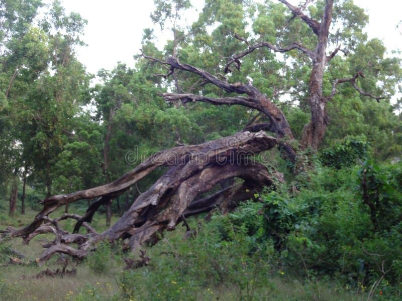 Древовидная структура в джунглях деревни стоковая фотография