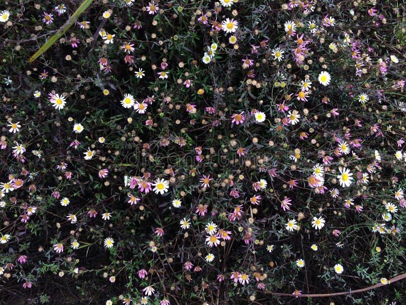 Другие зацветая цветки стоковые изображения rf