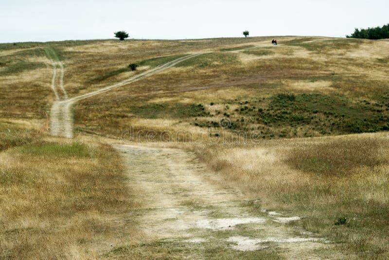 Другие цвета травы стоковые изображения rf