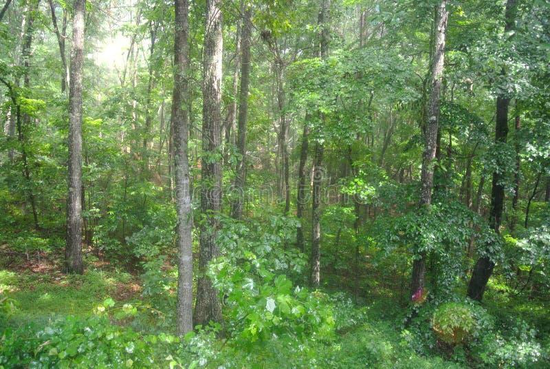 Зеленая жизнь стоковое фото rf