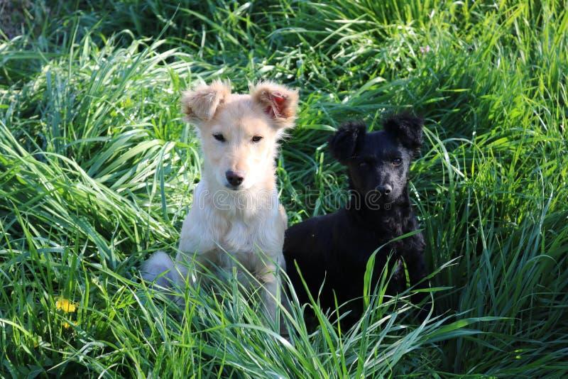 Друг 2 собак, черно-белый стоковое изображение