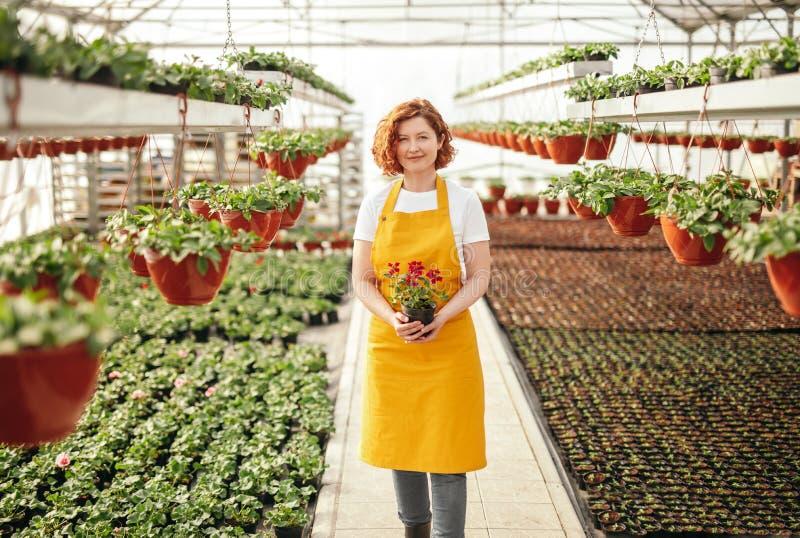 Дружелюбная женщина с цветком в парнике стоковые фотографии rf