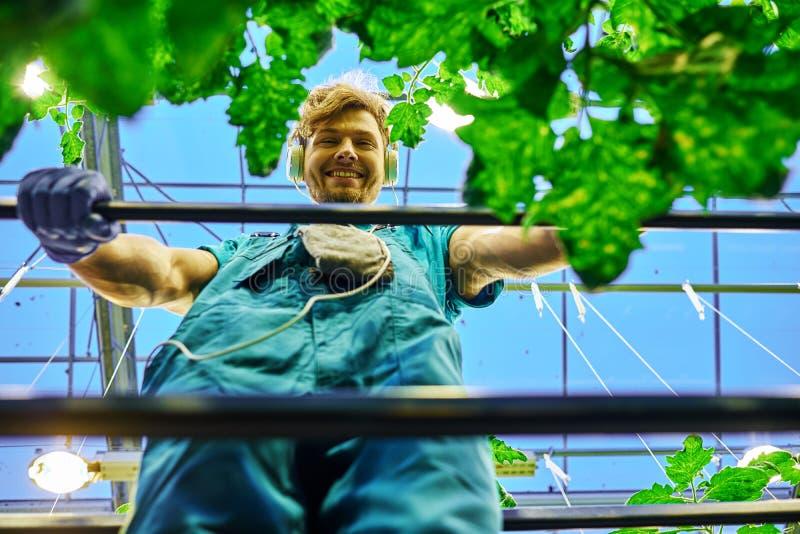Дружелюбный фермер работая на гидравлической платформе подъема ножниц в парнике стоковая фотография rf