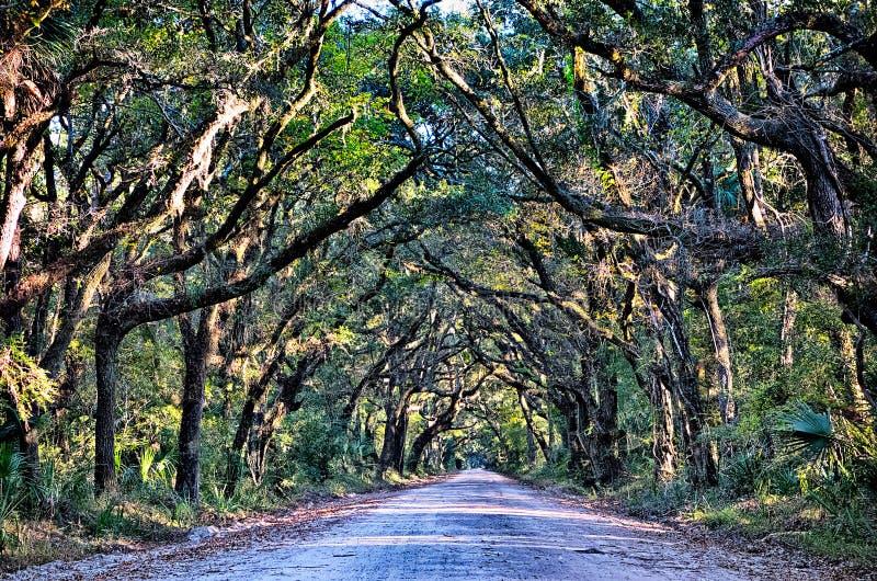 Дубы болота грязной улицы плантации залива ботаники пугающие прокладывают тоннель wi стоковые изображения
