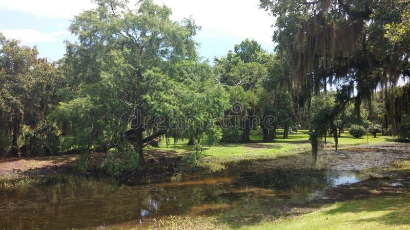 Дубы и кипарисы Луизианы мшистые стоковые фотографии rf