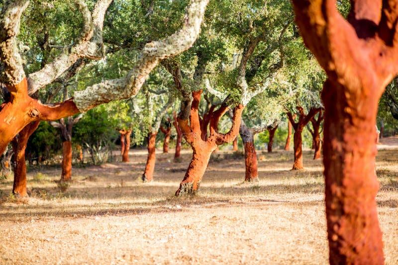 Дубы пробочки в Португалии стоковое изображение