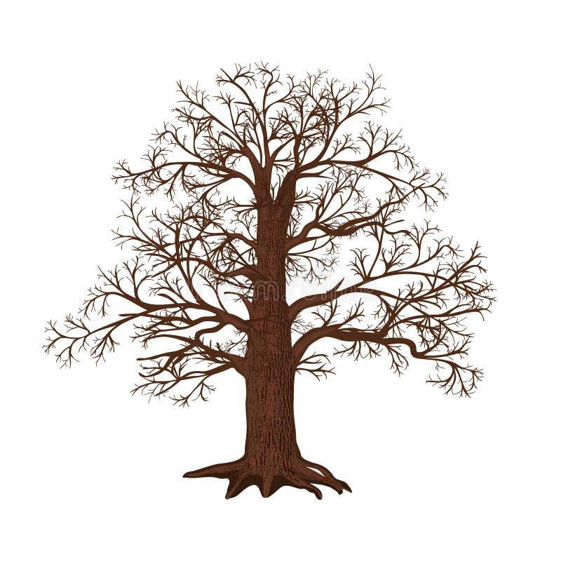 Дуб без листьев на белой предпосылке бесплатная иллюстрация
