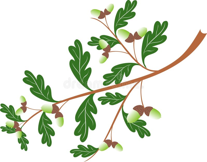 дуб ветви иллюстрация вектора