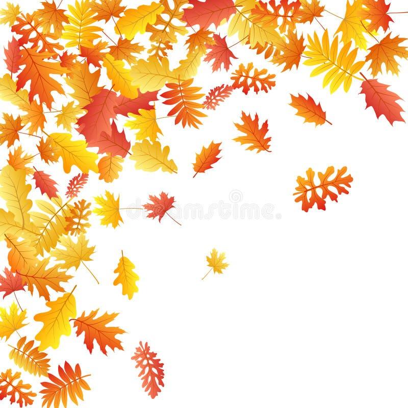 Дуб, клен, одичалая рябина золы покидает вектор, листва осени на белой предпосылке бесплатная иллюстрация