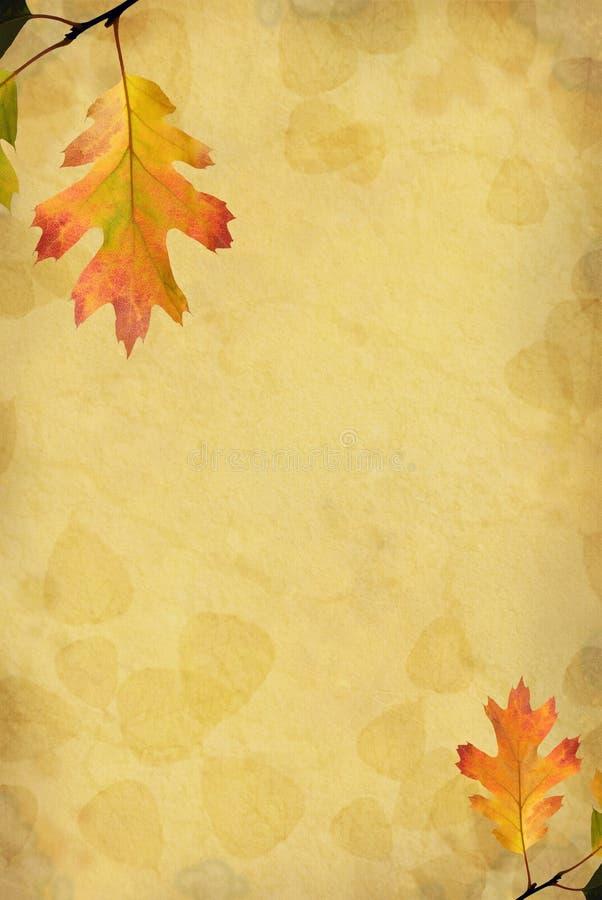 дуб листьев предпосылки стоковые изображения
