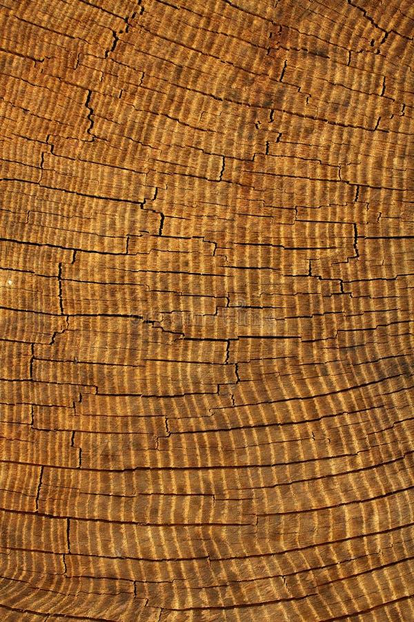 дуб текстурирует вал стоковое фото rf