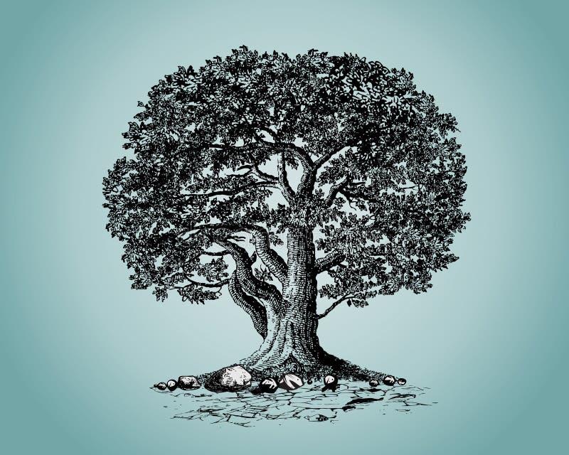 дуб бесплатная иллюстрация