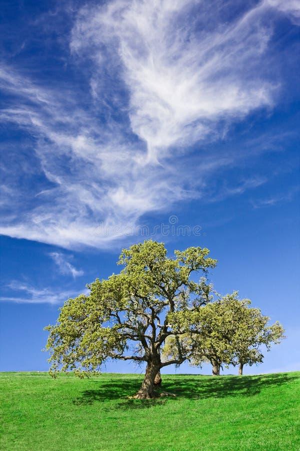 дуб cloudscape стоковое изображение rf