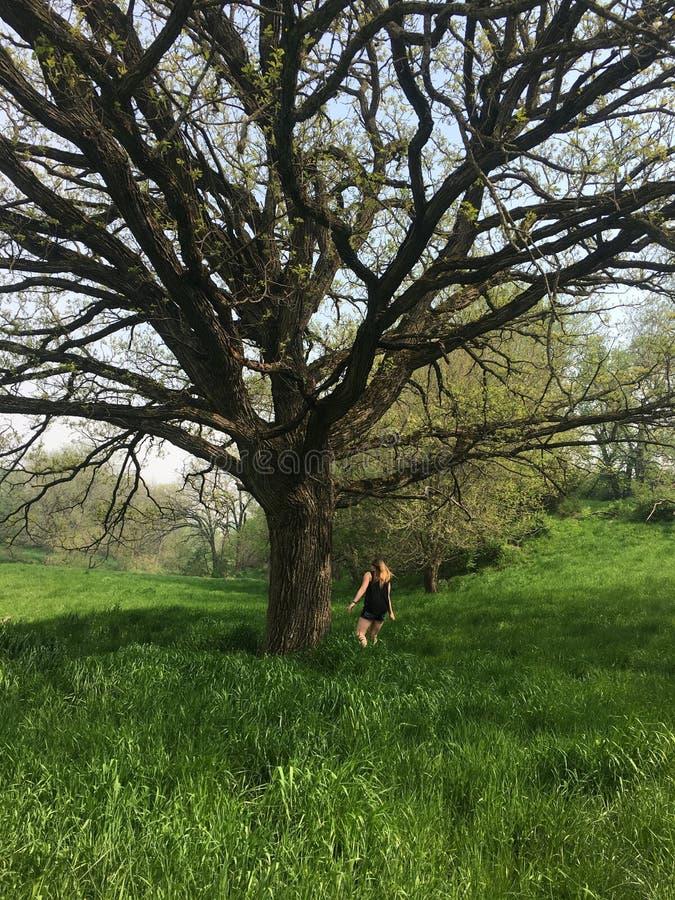 Думая дерево стоковое изображение rf