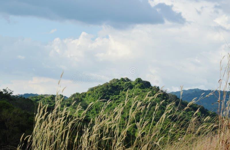 Дуть травы цветя от ветра на горе Khao Lon в Таиланде стоковая фотография