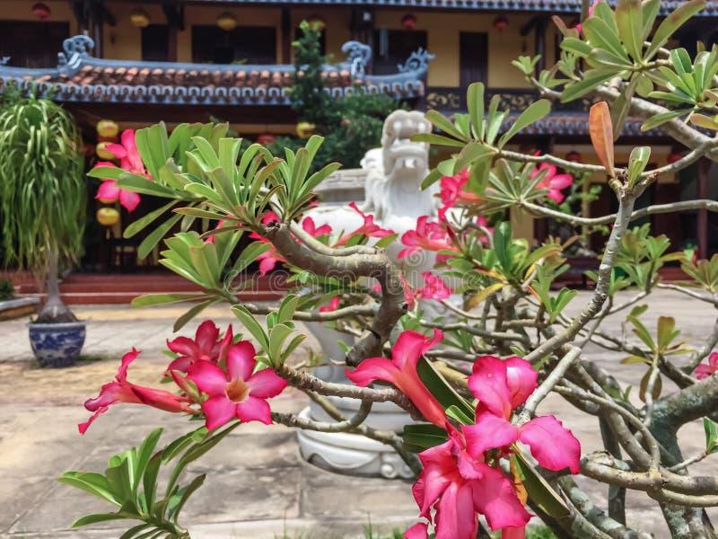 Душевнобольно красивые цветки на улицах Вьетнама стоковое изображение rf