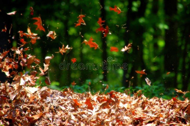 Дуя листья стоковая фотография