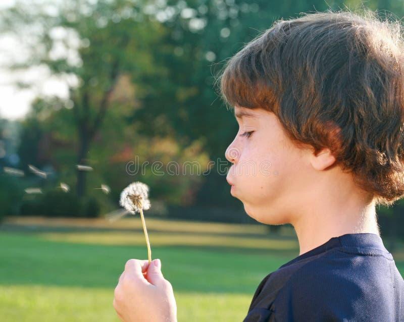 дуя семена мальчика стоковое фото