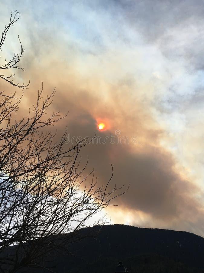 дым от огня стоковые фотографии rf
