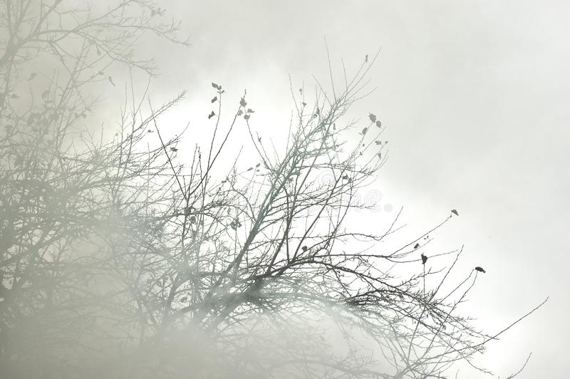 Дым пробуя спрятать дерево BranchesSmoke пробуя спрятать бюстгальтер дерева стоковые фотографии rf