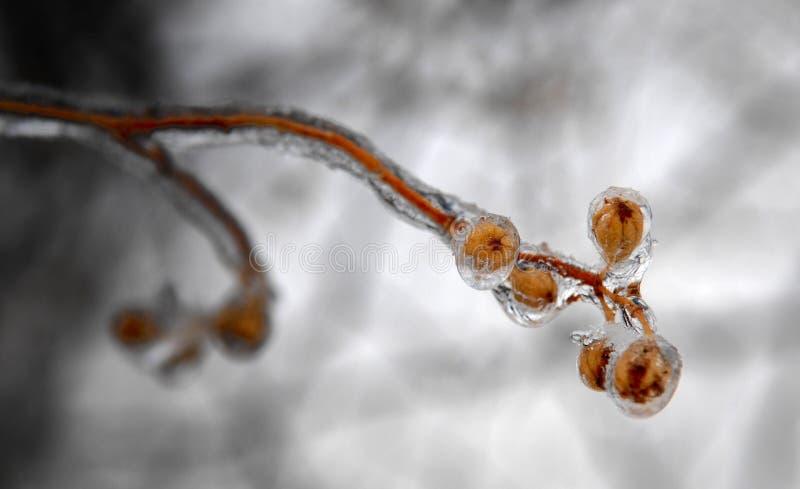 Дыхание льда стоковые фото